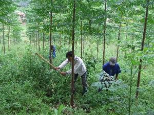 Forestry sector urged to restructure
