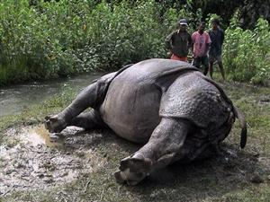 Nepal police arrest 14 for rhino poaching