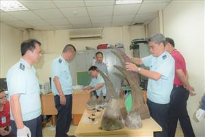 Rhino horn cache seized at Noi Bai Airport