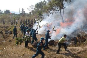 Minister urges preventive measures against forest fires