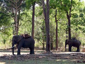 Conference highlights elephant conservation