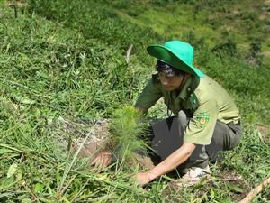 Central Highlands provinces fail to meet forest replantation target