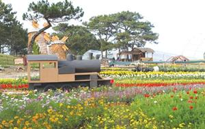 Floral extravaganza to warm Da Lat chill