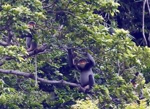 Youth programme on primate protection in Vietnam launched