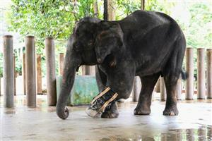 Malaysia elephant sanctuary trumpets effort to cut human-animal conflict