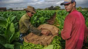 Cuban cigars hit record sales thanks to increasing Chinese demand