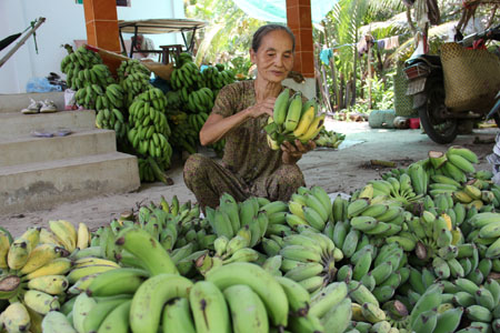 The Chiquita-Fyffes Merger: Should Vietnamese banana farmers adopt mass production or product diversification?