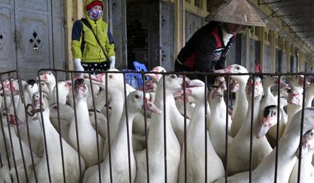 Bird flu scare prompts tighter restrictions