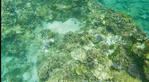 Tour guides form team to save coral off coast of Bình Thuận Province