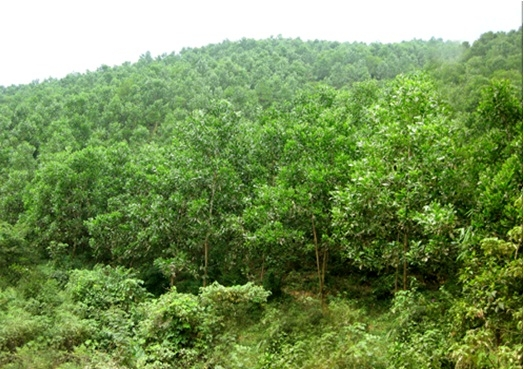 Vietnam targets 42% forest cover by 2020.