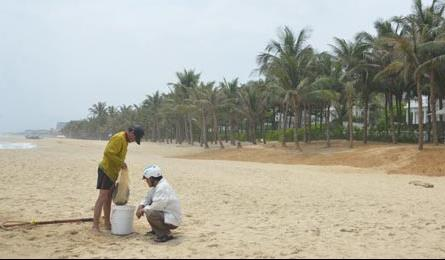 Danang authorities roll over as resorts privatise beach access