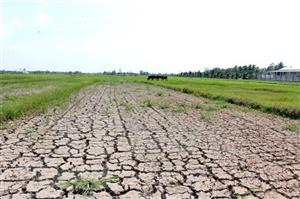Saline intrusion in Mekong Delta likely to linger on