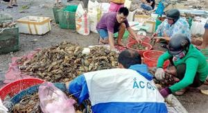 Phu Yen lobster farmers receive aid from state budget