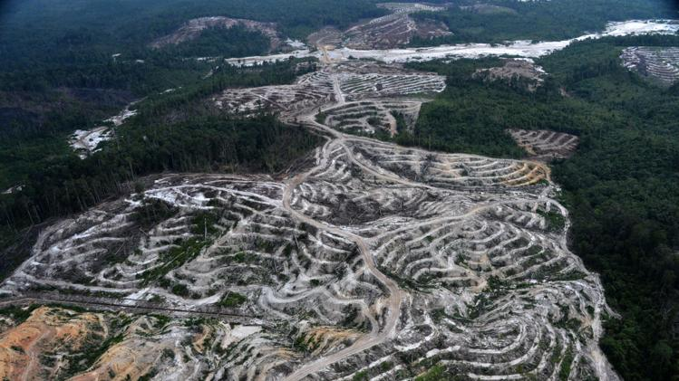 New study shows Indonesia's disastrous deforestation