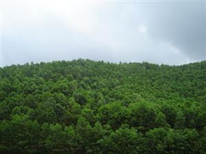 Vietnam targets 42 percent forest coverage by 2020
