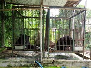 2 more bears sent to rescue centre
