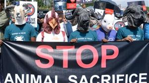 Nepal activists call for end of animal sacrifice