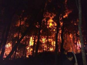 Fires ravage forests in central region in prolonged heat wave