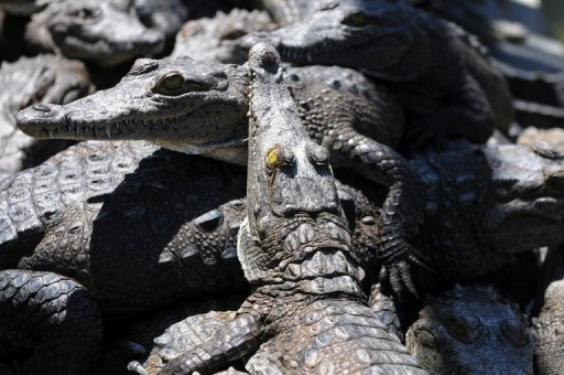 Five dead crocodiles, 14 critically endangered turtles and a cache of other rare species have been found in the home of a suspected wildlife trader in one of the Philippines' biggest slums, the government said Friday.
