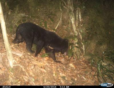 Endangered bear found in central Vietnam