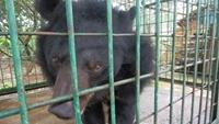 Bear kept in captivity shifted to rescue centre