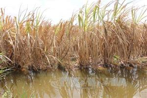 Mekong Delta region projected to face serious saltwater intrusion by 2030