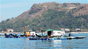 Funds allocated to preserve Lý Sơn Marine Protected Area