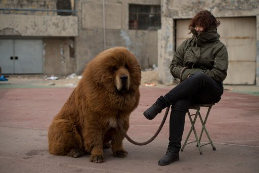 China zoo under fire for disguising dog as lion