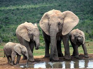 Elephant preservation week launched in Quang Nam