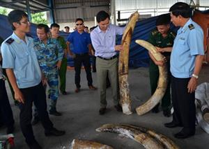 Customs officer prosecuted for stealing ivory
