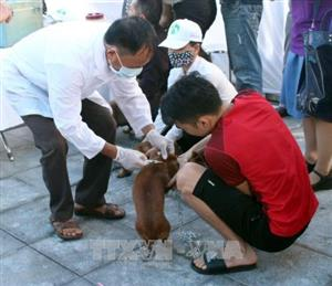 Just 41% of dogs in Vietnam vaccinated