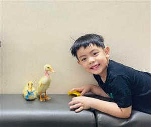 Children keep ducklings as pets during social distancing