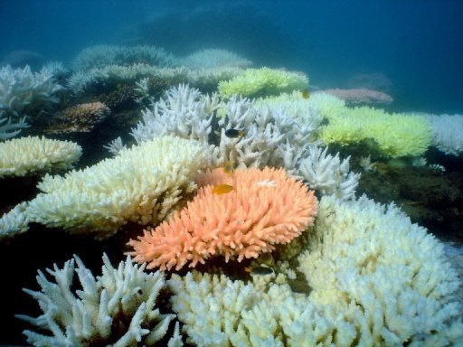 Ministers meet for crunch biodiversity talks