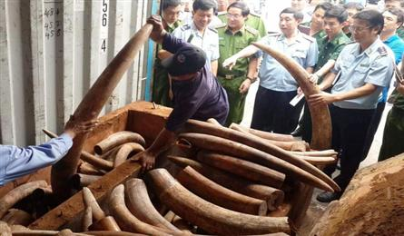 Large amount of ivory seized at southern port