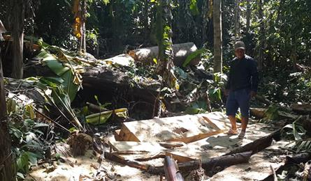 Forest illeglly felled in central region forest