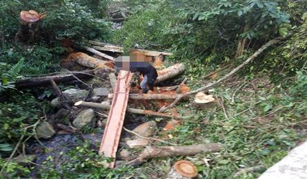 Illegal logging found at Central Highlands forest