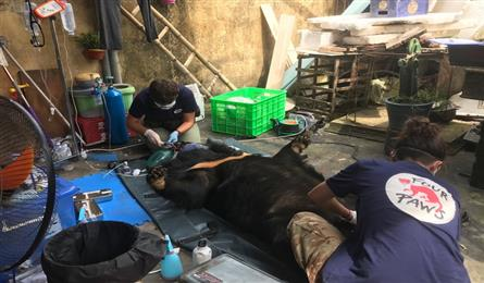 Bear in captivity for 15 years sent to rescue centre