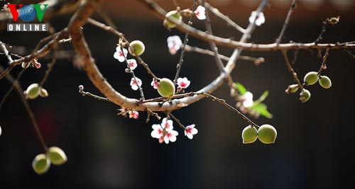 Mong ethnic people welcome New Spring