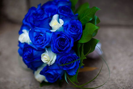 fake blue roses bring real money for shops on valentine's, Ideas