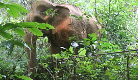 Dak Nong investigates death of 40-year-old elephant