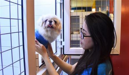 Pet care services earn big on Tet