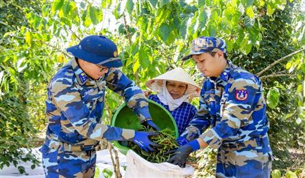 Soldiers help southern farmers to harvest pepper