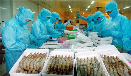 Vietnam faces USD10bn shrimp export challenge