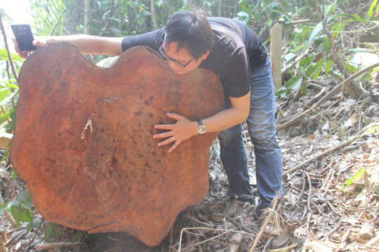 Forests enrich illegal loggers: NA deputies