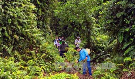 U Minh Ha forest faces fire risk