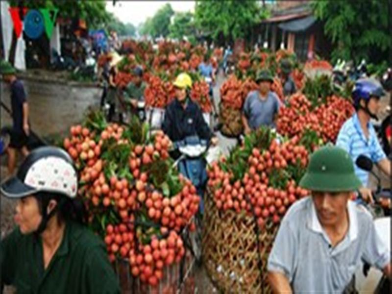 Irradiation costs make lychee exports difficult