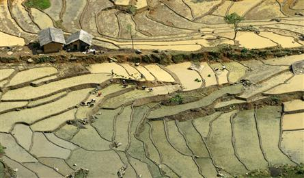 Lao Cai's terraced fields ready for planting