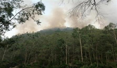 More than 1,600 people deployed to save forest
