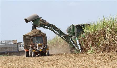 Record sugar inventory means bitter news