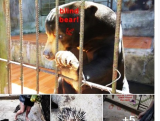 Tourist site in Dalat accused of animal mistreatment